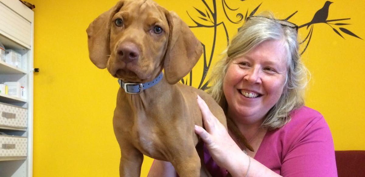 DZVhÄ Homöopathie-Kongress: Integrative Krebsbehandlung von Hund und Katze